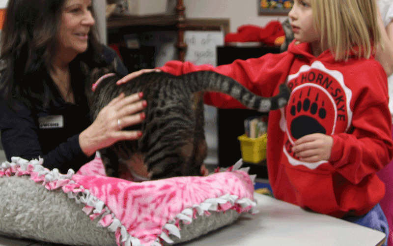 Humane Society staff and a student pet a cat on a table in a classroom next to a basket with a blanket